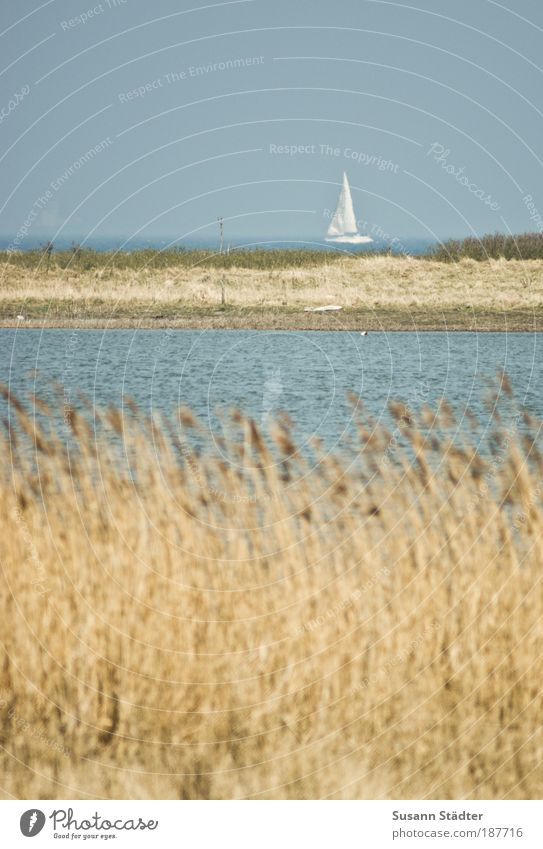 Water Ocean Summer Beach Loneliness Far-off places Movement Coast Air Waves Trip Island Lakeside Baltic Sea Navigation Common Reed