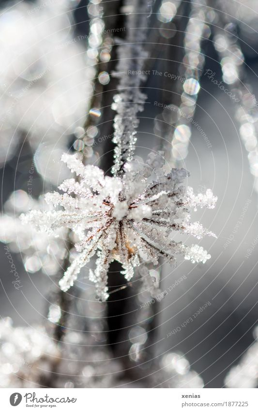 frost work Nature Water Winter Ice Frost Snow Plant Flower Blossom Cold White Elegant Delicate ice cream Hoar frost Ice crystal Glitter Freeze Frostwork