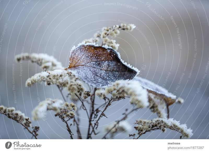 Frozen Environment Nature Winter Ice Frost Plant Grass Bushes Leaf Grass blossom Forest Still Life Ice crystal hoar frost Father Frost amid To hold on