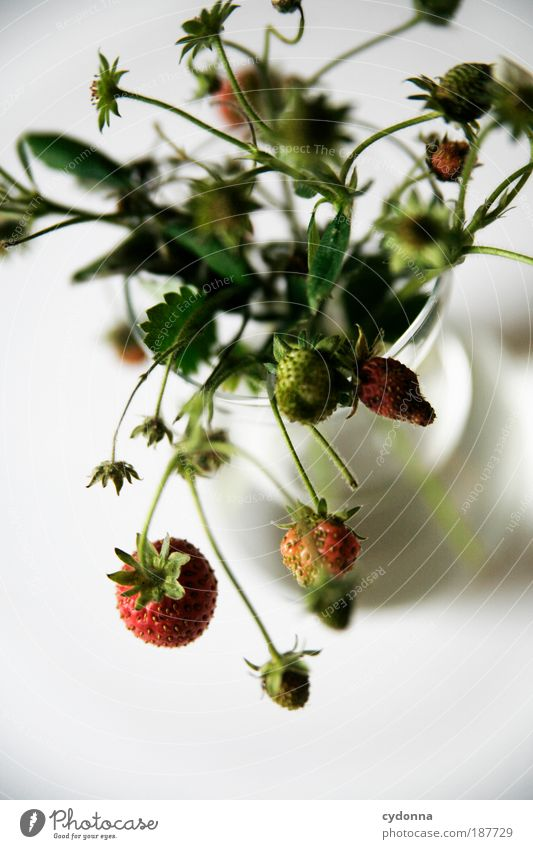 Nature Beautiful Plant Life Nutrition Food Healthy Fruit Elegant Esthetic Growth Decoration Uniqueness Transience Delicate Healthy Eating