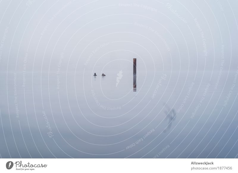 Ducks in the mist Landscape Water Fog 2 Animal Creepy Cold Gray Loneliness Calm Mole Lake Bird Minimalistic Colour photo Exterior shot Deserted Day Reflection