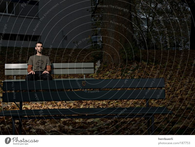 Park at night Leisure and hobbies Human being Masculine Young man Youth (Young adults) Adults Life 1 18 - 30 years Wait Brown Green Black Park bench Tree Leaf
