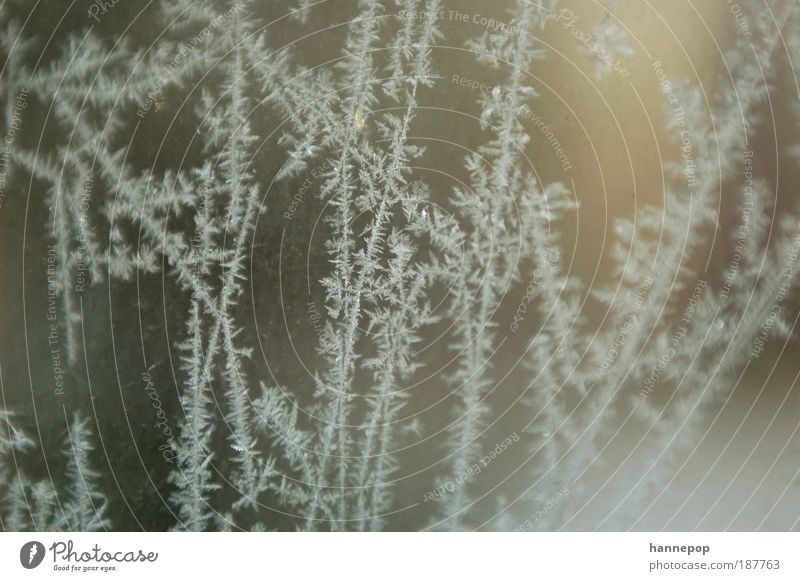 road network Winter Snow Water Climate Weather Ice Frost Fresh Cold Clean White Nature Crystal Frostwork Colour photo Subdued colour Exterior shot Close-up Day