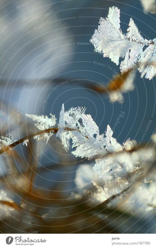 Nature Winter Cold Snow Meadow Grass Ice Frost Macro (Extreme close-up) Beautiful weather Frostwork