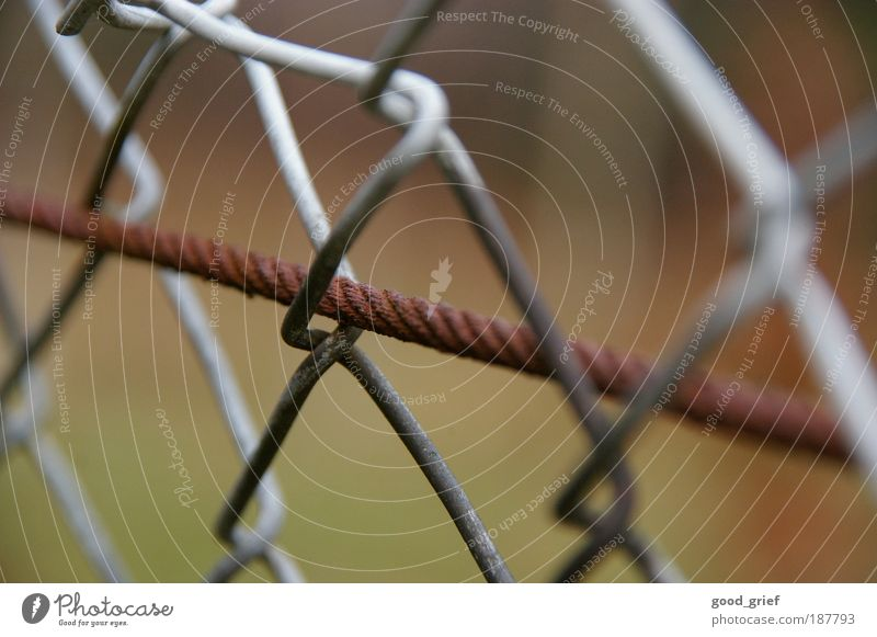 trapped in liberty Environment Nature Autumn Garden Meadow Metal Knot Brown Gray Wire Wire cable Wire netting fence Loop Rust Steel Captured Fenced in