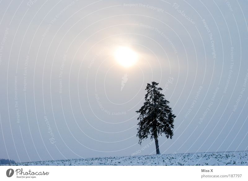 single Winter vacation Environment Nature Sky Clouds Sun Climate Weather Bad weather Fog Ice Frost Snow Tree Dark Creepy Cold Loneliness Colour photo