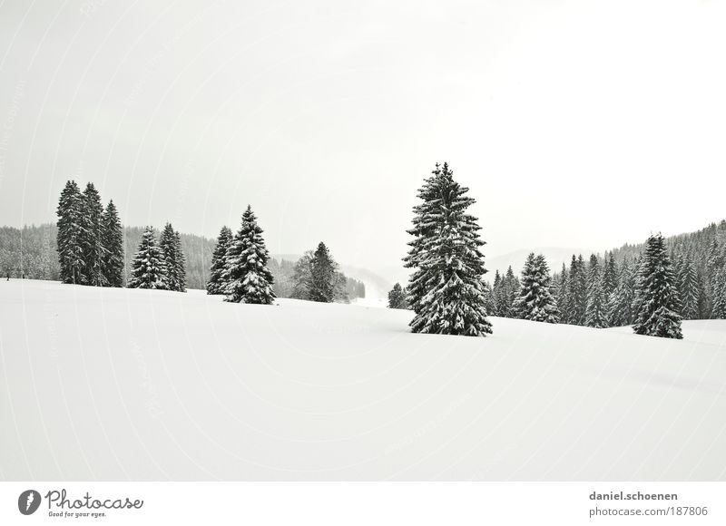 Nature White Winter Vacation & Travel Far-off places Forest Snow Landscape Ice Bright Frost Tourism Fir tree Tree Black Forest Winter vacation