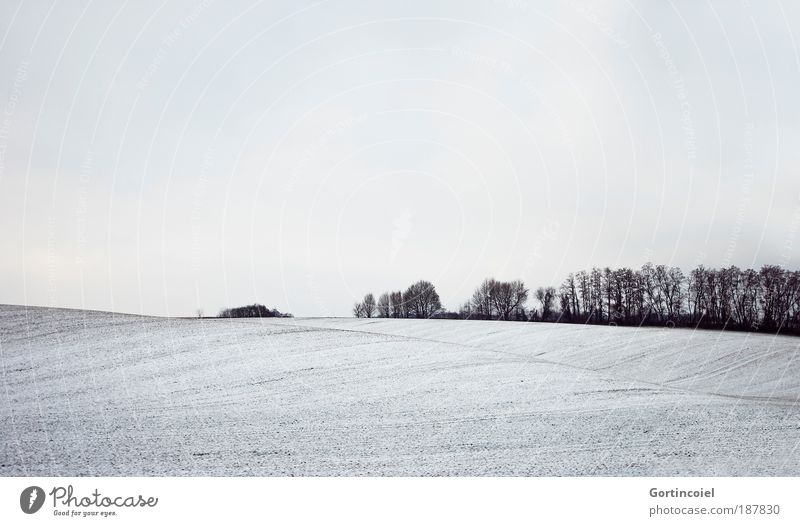 winter Environment Nature Landscape Air Sky Clouds Winter Snow Tree Field Forest Hill Breathe Bright Cold Black White Line Colorless Empty Far-off places