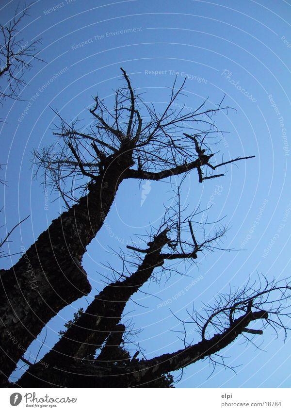 tree Tree Summer Sky Corner