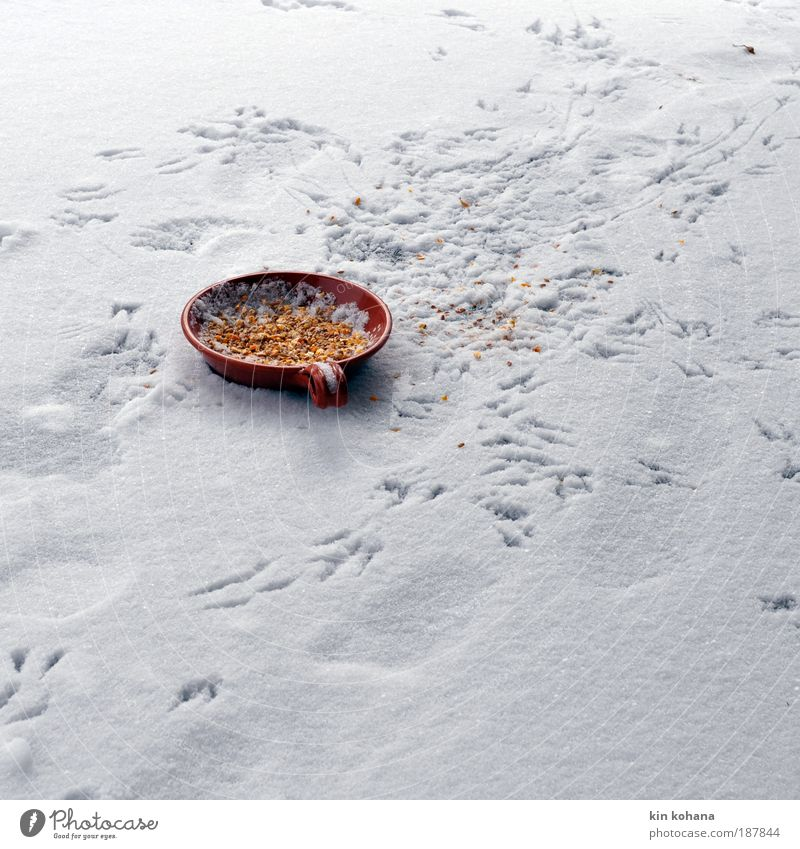 brag Grain Nutrition Bowl Winter Ice Frost Snow Wild animal Bird Animal tracks Group of animals Footprint Flying To feed Freeze Feeding Appetite Gluttony