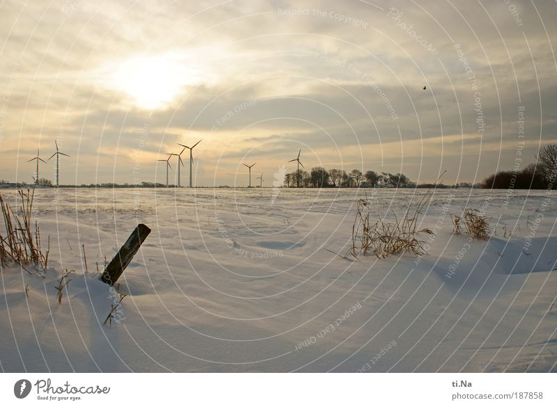 Nature Water Plant Winter Snow Landscape Air Ice Field Environment Frost Freeze Beautiful weather Schleswig-Holstein Dithmarschen