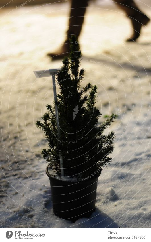 Nature Christmas & Advent Winter Cold Snow Moody Wait Small Going Hope Christmas tree Sidewalk Boots Patient