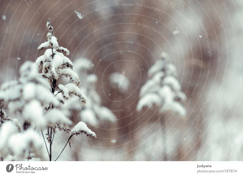 Nature White Beautiful Plant Winter Calm Cold Snow Environment Snowfall Moody Brown Ice Climate Hope Frost