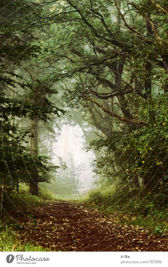 Nature Forest Relaxation Grass Dream Landscape Fog Environment Foliage plant Deserted Exterior shot Colour photo Discover Plant Environmental protection