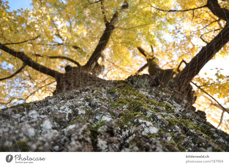 Nature Tree Plant Leaf Autumn Dream Warmth Landscape Growth Lie Observe Branch To hold on Moss Beautiful weather Warm light