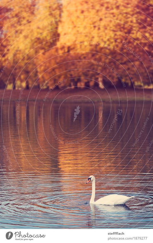 Nature Blue Beautiful Water White Tree Loneliness Animal Forest Autumn Natural Lake Orange Park Waves Trip