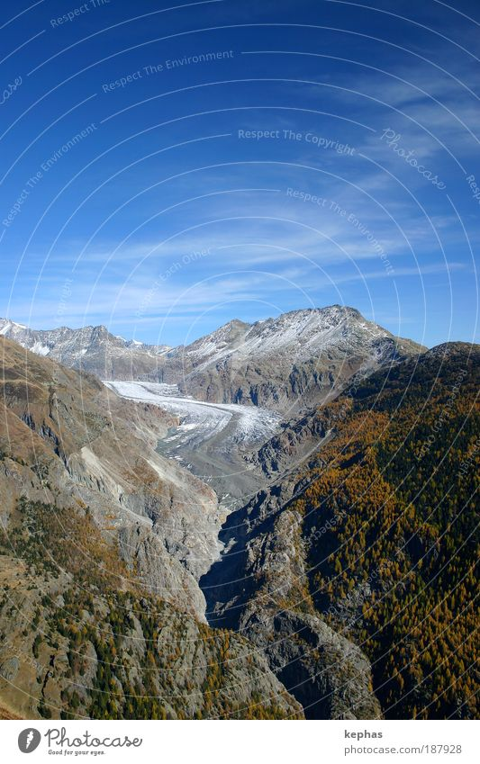 Large (?) Aletsch Glacier Environment Nature Landscape Sky Clouds Autumn Climate Climate change Beautiful weather Forest Rock Alps Mountain Peak Canyon