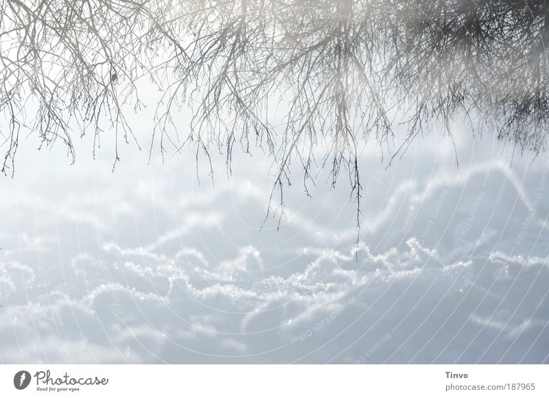 winter reflections 2 Environment Nature Elements Winter Climate Beautiful weather Ice Frost Snow Bushes Bright Contentment Calm Snowscape Twigs and branches