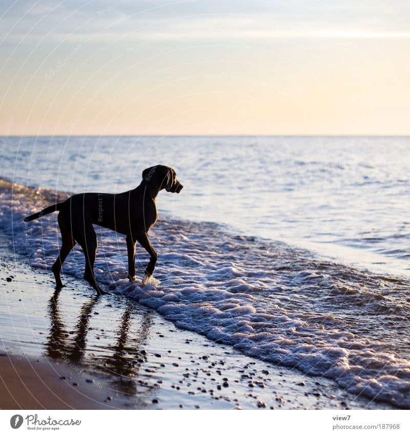 Water Sky Ocean Summer Beach Animal Freedom Dog Waves Elegant Walking Environment Wet Authentic Observe Joie de vivre (Vitality)