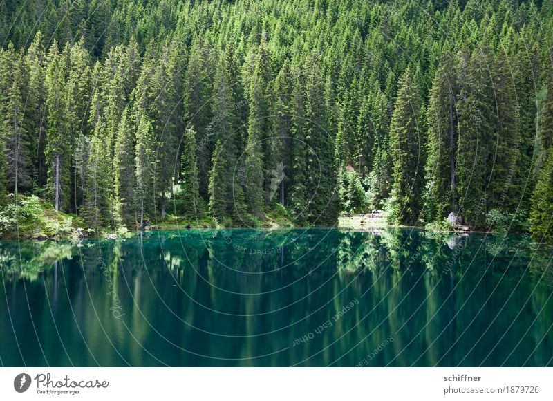 Green is the hope... Environment Nature Landscape Plant Tree Forest Lakeside Reflection Mirror image Coniferous trees Coniferous forest Exterior shot Deserted