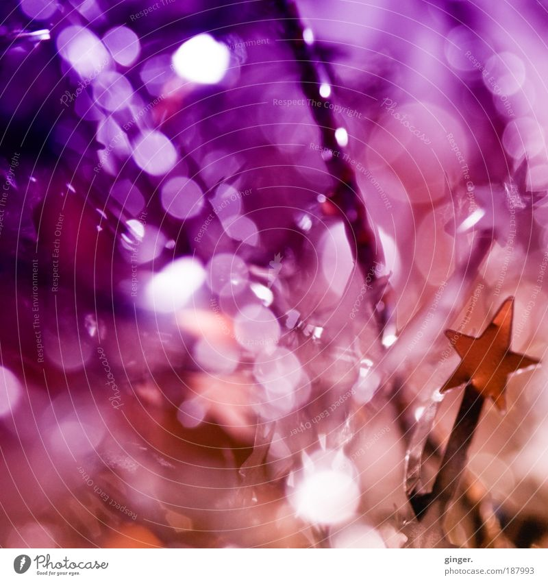 Christmas & Advent Feasts & Celebrations Pink Gold Glittering Decoration Star (Symbol) Desire Sign Point Reflection Violet New Year's Eve Colour photo Structures and shapes Silver
