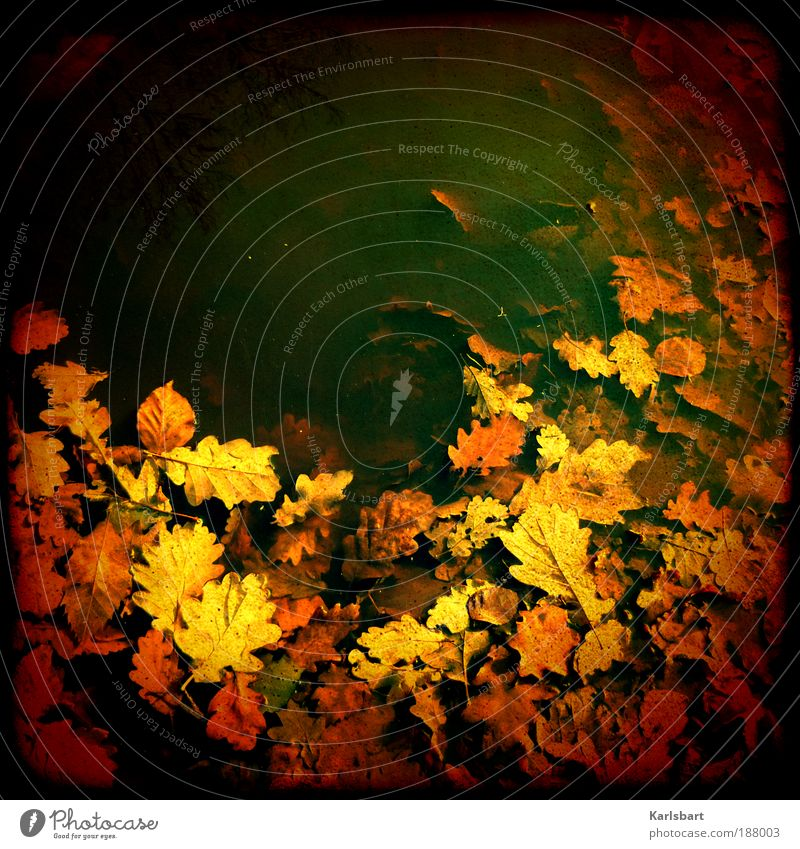 Sky Nature Water Colour Leaf Loneliness Environment Autumn Freedom Wet Design Crazy Lifestyle Branch Whimsical Fishing (Angle)