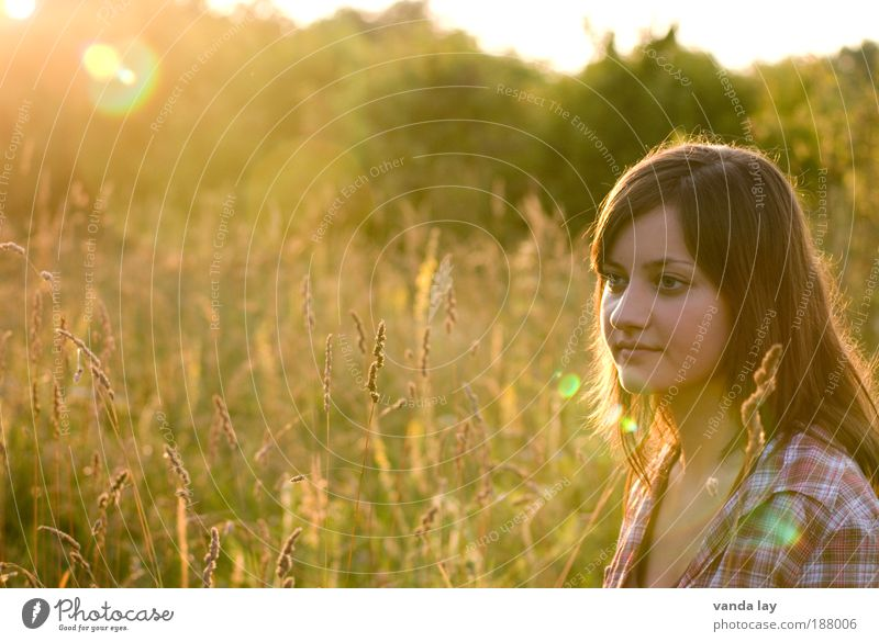 Woman Human being Nature Youth (Young adults) Beautiful Plant Summer Sunset Life Feminine Grass Contentment Depth of field Time Adults