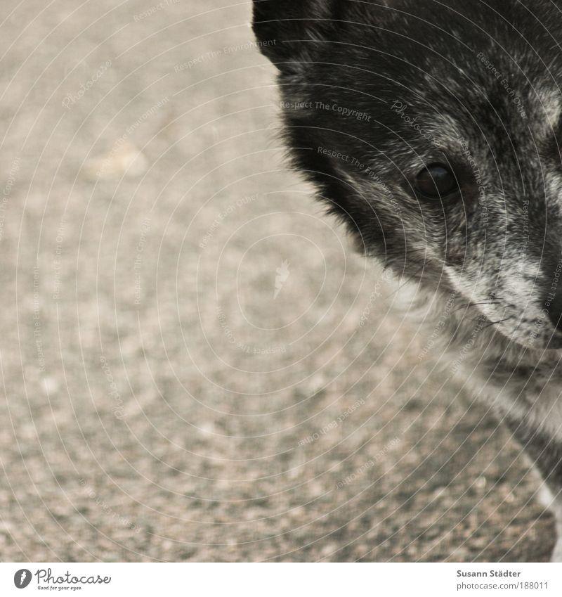 Dog Old Animal Gray Wait Hope Corner Curiosity Pelt Animal face Fatigue Interest Pet Snout Toys
