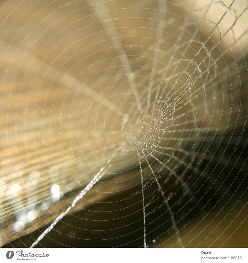 Nature House (Residential Structure) Wood Rain Art Environment Drops of water Network Culture Decoration Frozen Moving (to change residence) Hollow Captured Spider Attachment