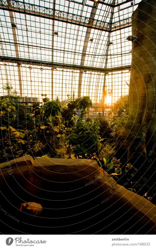 Happ New Year Sunrise Sunset Hall Greenhouse Glass Window pane Slice Pane Tropical greenhouse Virgin forest Tropic trees tropical island Botanical gardens