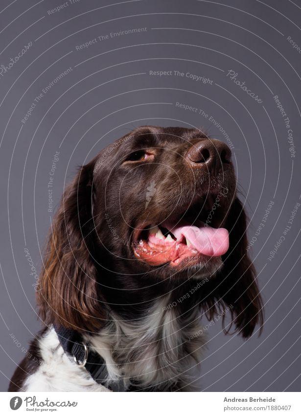 Dog Beautiful Animal Background picture Curiosity Pet Workshop Smart