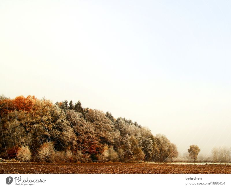 Sky Nature Plant Beautiful Tree Landscape Leaf Winter Forest Cold Autumn Beautiful weather