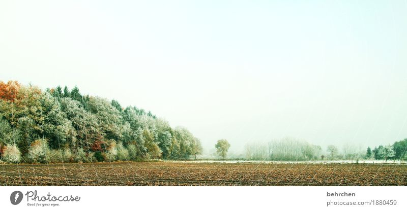 Sky Nature Plant Beautiful Tree Landscape Leaf Winter Forest Cold Autumn Snow Field Ice Idyll Bushes