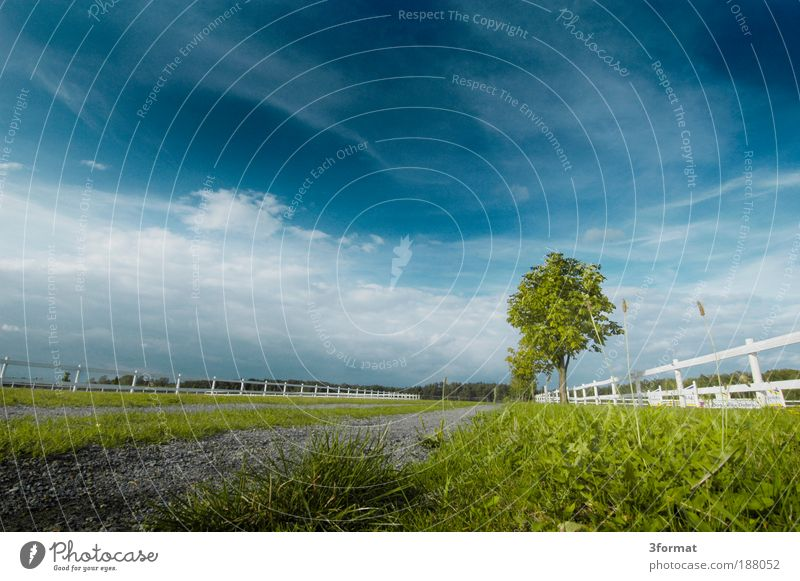 Nature White Summer Vacation & Travel Far-off places Meadow Landscape Field Weather Trip Lawn Infinity Pasture Beautiful weather Day Ride