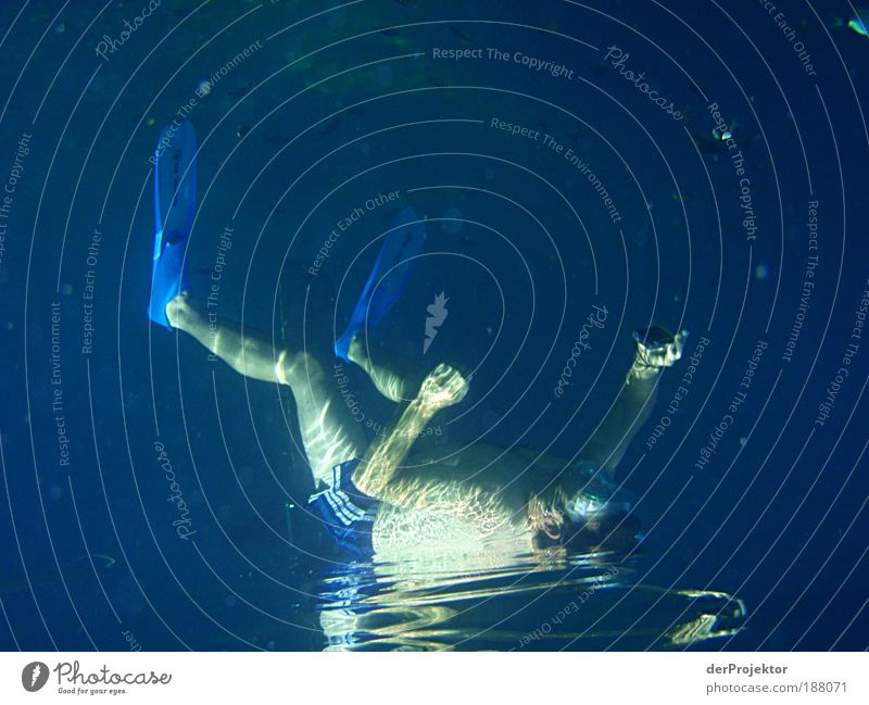 Photographing lying on the water is possible after all. Leisure and hobbies Playing Vacation & Travel Tourism Trip Safari Summer Summer vacation Sports Dive