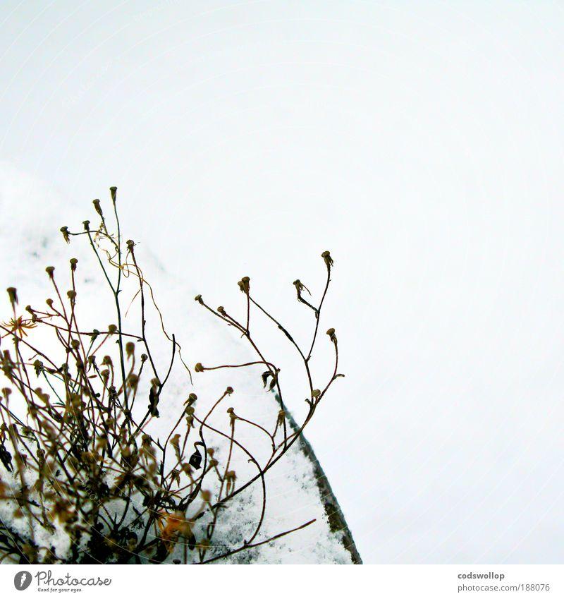en plein hiver Nature Plant Winter Snow Pot plant Cold Gloomy Exhaustion Death Environment Terrace Colour photo Exterior shot Detail Day