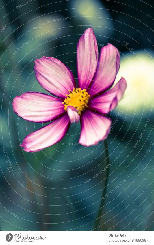 Nature Plant Summer Flower Relaxation Calm Warmth Blossom Interior design Autumn Art Garden Design Pink Wild Park