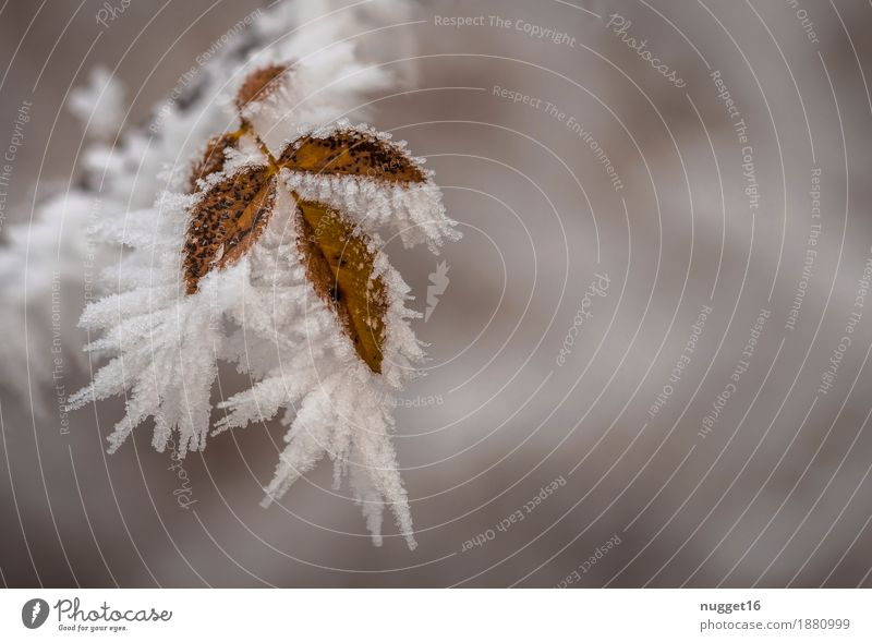 freezing Environment Nature Plant Elements Water Winter Climate Climate change Fog Ice Frost Snow Snowfall Tree Bushes Leaf Wild plant Garden Park Field Forest