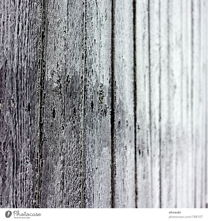 chill Winter Ice Frost Wall (barrier) Wall (building) Garden Fence Garden fence Wood Black White Wood grain Wooden board Hoar frost Subdued colour Exterior shot