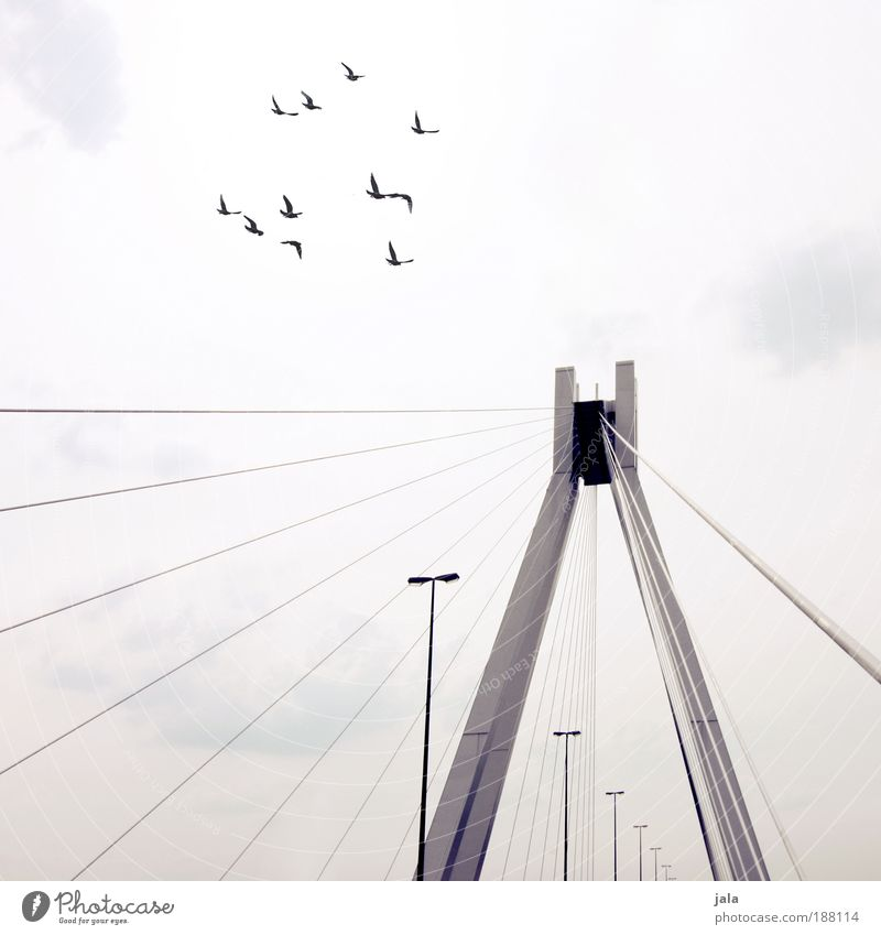 Sky Clouds Architecture Bright Bird Bridge Gloomy Animal Group of animals Manmade structures Day Lantern Traffic infrastructure