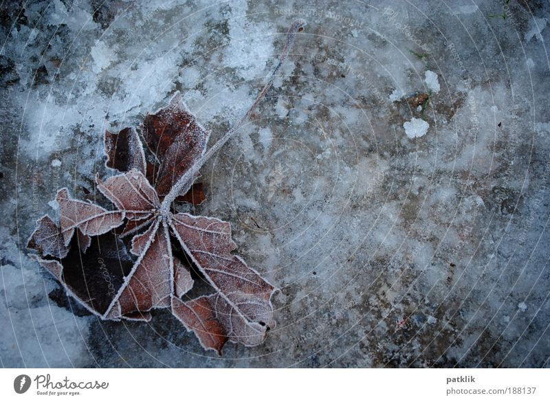 Frozen Leaf Nature Landscape Earth Winter Climate change Weather Ice Frost Park Field Small Town Outskirts Freeze Lie Cool (slang) Broken Brown Gray White Grief