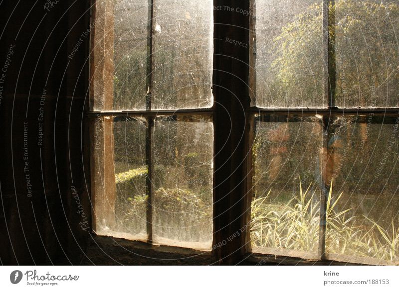 window House (Residential Structure) Window Observe Looking Positive Calm Curiosity Hope Belief Longing Loneliness Inhibition Future sunshine Morning Fairy tale