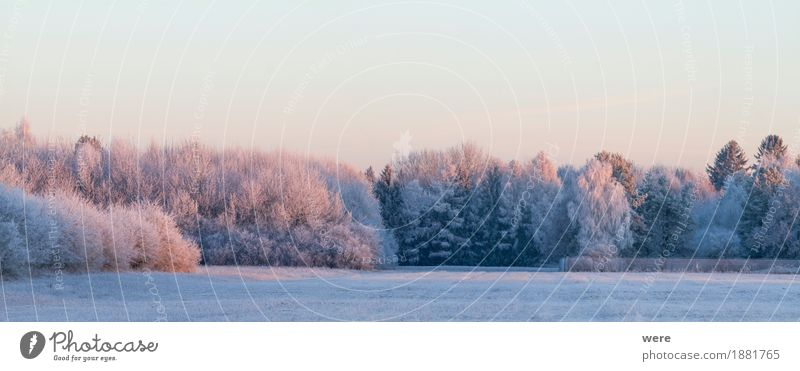 winter morning Calm Winter Nature Landscape Plant Ice Frost Tree Cold Peaceful Environmental protection Habitat flora and fauna annual cycle Morning fog