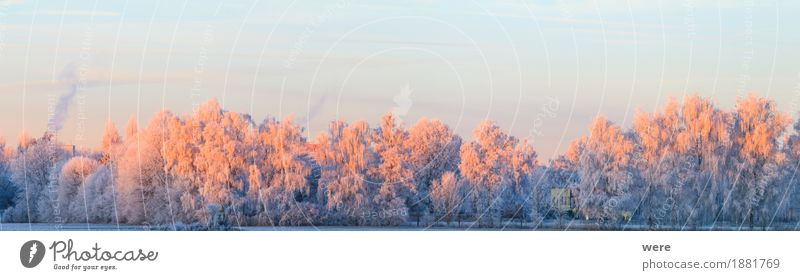 tree annealing Calm Winter Nature Landscape Plant Ice Frost Tree Cold Peaceful Environmental protection Habitat flora and fauna annual cycle Morning fog
