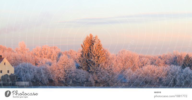 Nature Plant Tree Landscape Calm Winter Cold Ice Frost Environmental protection Peaceful Habitat Recreation area Morning fog