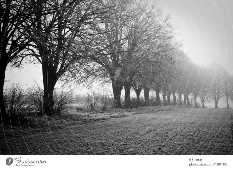 Fog in the morning Nature Landscape Earth Winter Ice Frost Tree Grass Field Forest Lanes & trails Think Freeze Sadness Dark Cold Gray Black White Grief Death