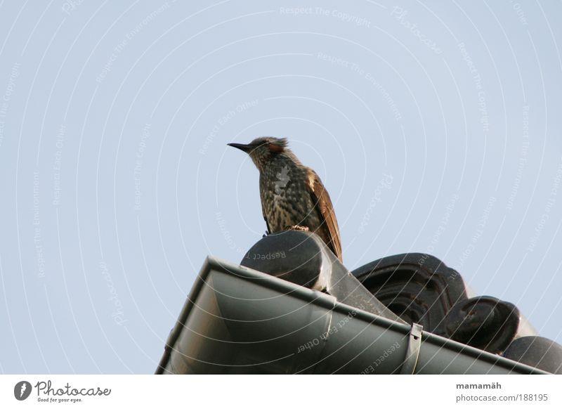 Sky Animal Think Bird Wait Flying Sit Vantage point Roof Feather Observe Beak