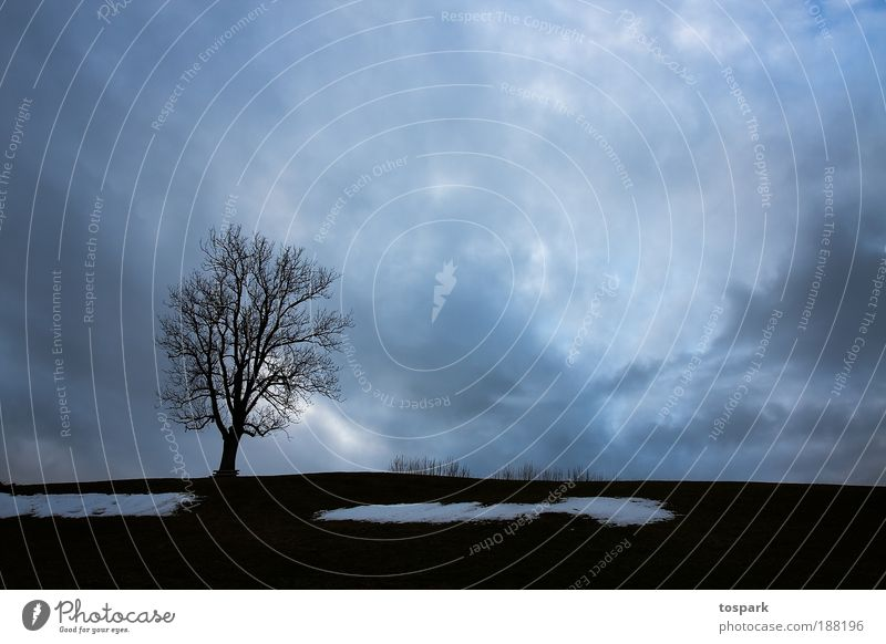 Nature Sky Tree Blue Winter Calm Black Clouds Far-off places Dark Snow Meadow Gray Landscape Air Moody