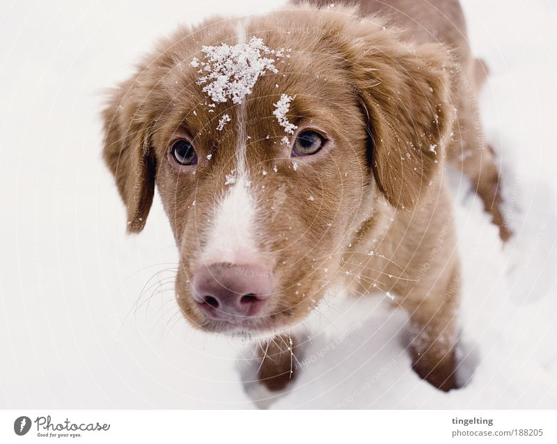 Nature White Eyes Animal Snow Light Happy Dog Contentment Brown Pink Free Near Simple Pelt Touch
