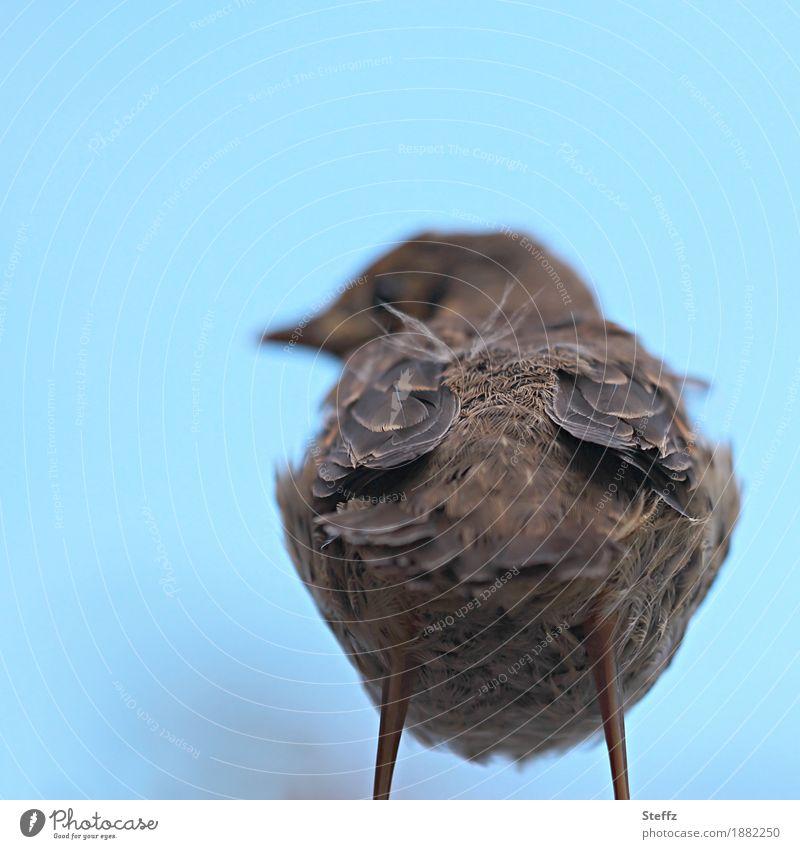 My back's nice. Nature Bird Feather Hind quarters Baby animal Stand Cool (slang) Brash Funny Blue Brown Arrogant Defiant Contempt Back Derogative Disinterest